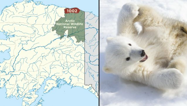 Alaska Sues U.S. Government For Not Letting It Look For Oil In Polar Bear Habitat