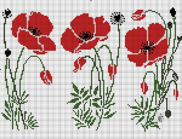 Poppies blowing in the wind.