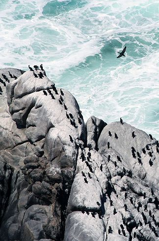 Cape Town - South Africa | 21 Breathtaking Coastlines To Add To Your Bucket List