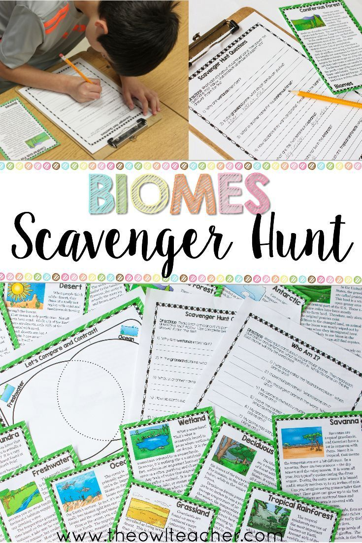 Ecosystems Scavenger Hunt Printable Digital Google Middle School Science Teaching Science Science Education [ 1102 x 735 Pixel ]