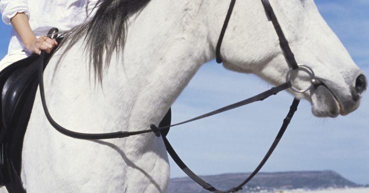 Como fazer uma cabeçada com corda. As cabeçadas fazem parte do arreio ou do cabresto do cavalo. Elas passam pelo freio ou pela focinheira, sobre a cabeça do cavalo, por trás de suas orelhas, depois pelo freio ou focinheira do outro lado, e são projetados para manter os apetrechos da cabeça firmes no lugar. Em um arreio, a cabeçada é normalmente feita de couro curado ou cru, e em um ...