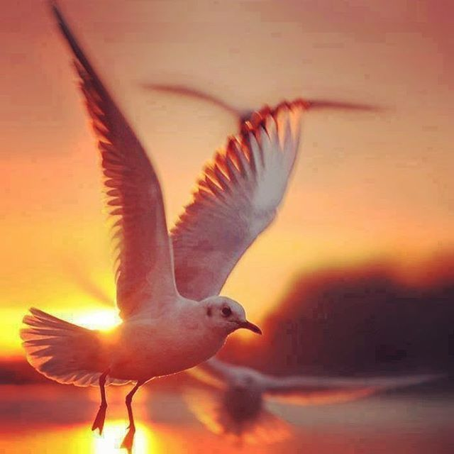 """""""Don't believe what your eyes are telling you. All they show is limitation. Look with your understanding. Find out what you already know and you will see the  way to fly."""" ~ Richard Bach, 'Jonathan Livingston Seagull' ☺️✨������ ���� . . . #goodmorning #mondaymotivation #inspiration #monday #mondaymood #mondaymorning #quote #motivationalquotes #inspire #seagull #quotestoliveby #life #lifequotes #quoteoftheday #mindfulness http://quotags.net/ipost/1500017296302433000/?code=BTRIciXDGLo"""