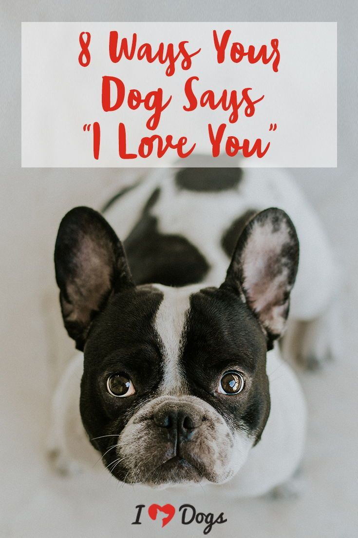 8 Ways Your Dog Says I Love You Dog Breeds Dog Breeds That Dont Shed Dogs