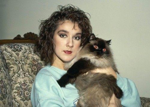 Quel beau chat !!