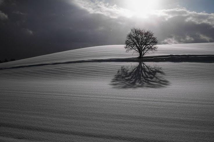 One Tree Hill / 丘の上の一本の木