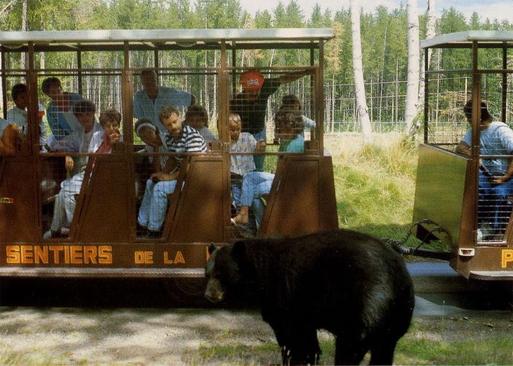 Canada - Zoo Sauvage de Saint-Félicien