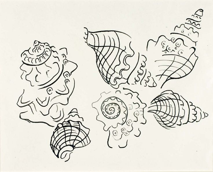 Walter Anderson  Shells lovely drawing with discontinuous lines