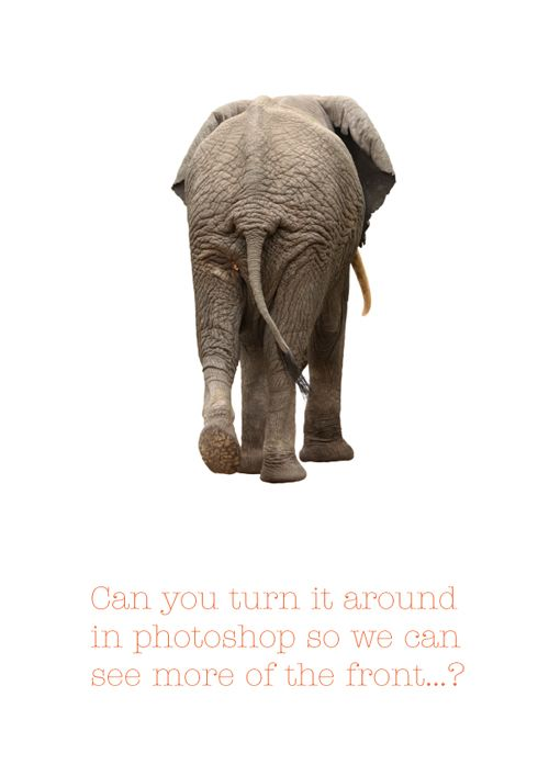 Elephant - Sharp Suits