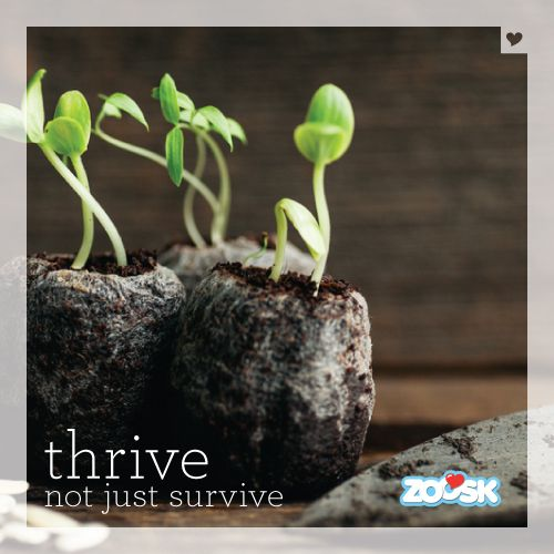 Thrive not survive.