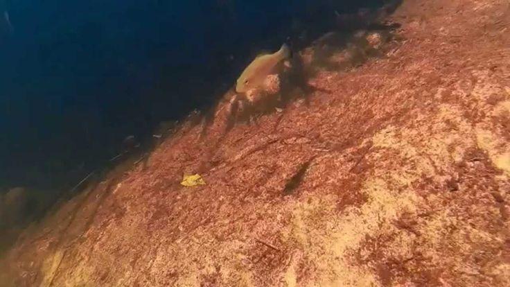 SJcam4000 Underwater Test