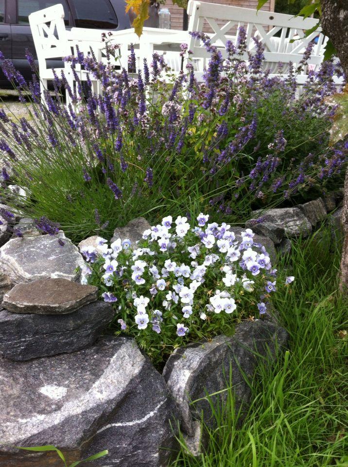 Vakre Lavendel.