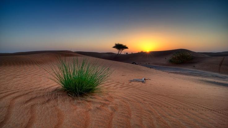 Kalahari Desert Sunrise fawn alpaca, green bamboo, yellow tencel, blue bfl/silk or blue merino