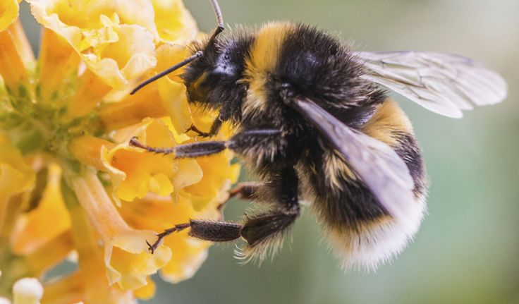 Automated #Pollination #Robots Support #Bees in #Poland