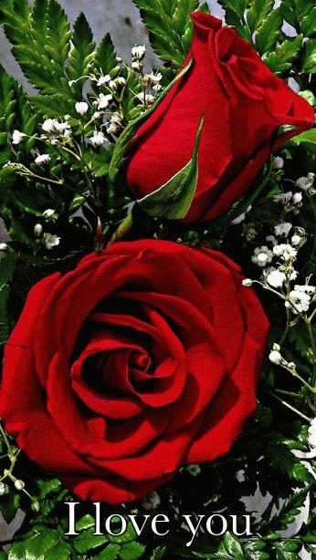"""""""Las grandes rosas rojas, cuyo brillo sangriento y áspero ardía bajo la ceniza húmeda de aquella mañana, me tentaban. Tenía grandes deseos de arrancar una. Pregunté el precio, sólo para poder acercarme a ellas lo más posible"""" Que bella rosa""""Google+"""