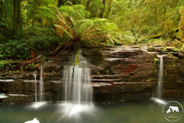 NSW HUNTER: Carved from an ancient volcano, Australia's Barrington Tops National Park is a World Heritage Wilderness Area where camping, bushwalking and kayaking are favourite activities and the experience is unique. http://visitbarringtontops.com.au/attractions/national-parks-and-wildlife