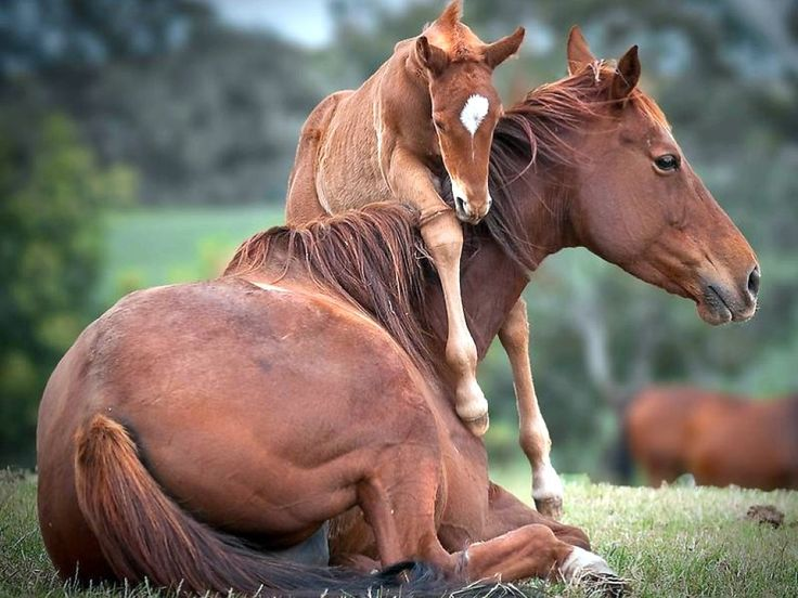 so enduring...@Diana Wanamaker ...I think I will always think of you, Diana, when I see horse:)