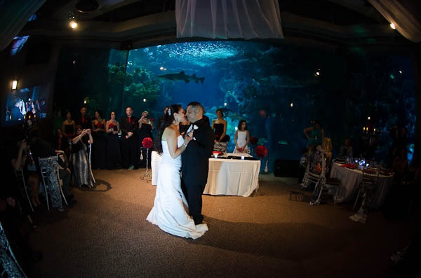 Florida Aquarium C Reef Room Tampa Photographers Celebrations Of Bay Http