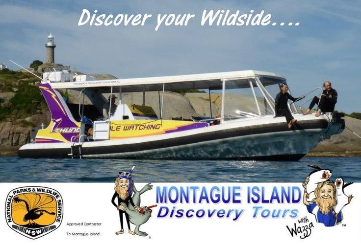 Home - Montague Island Discovery Tours with Wazza Discover your Wildside