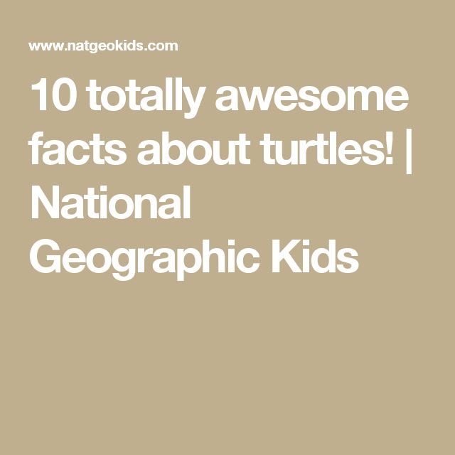 10 totally awesome facts about turtles! | National Geographic Kids