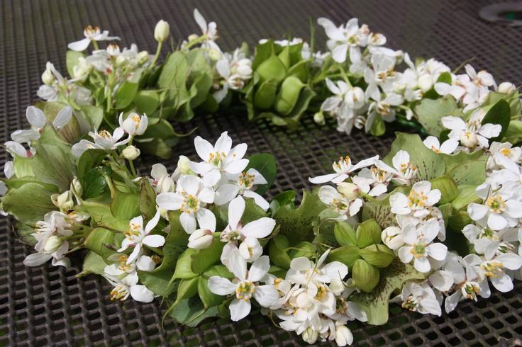 Bridesmaid circlet - choisya and hellebore seed heads