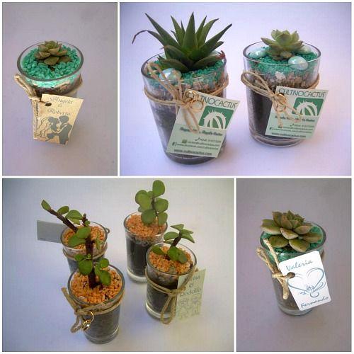 Plantas para souvenir manualidades para el jardin - Recuerdos de bodas para invitados ...