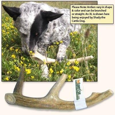 Pet Expertise Antler chews are natural, healthy, odor-free and long-lasting chew toys that will help keep your dog busy and out of trouble and will help keep his teeth clean. Our antler dog chews come right out of nature from North American deer and elk and are completely unprocessed! * #Dogs #Dog #Pets #Pet #Gift #Gifts #Christmas #Holiday #Holidays #Present #Presents #Accessories #Dog #Dogs #Chew #Toys #Toy