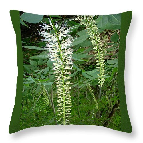 "White Fern Throw Pillow for Sale by Aimee L Maher Photography and Art Visit ALMGallerydotcom. Our throw pillows are made from 100% spun polyester poplin fabric and add a stylish statement to any room. Pillows are available in sizes from 14""x14"" up to 26""x26"". Each pillow is printed on both sides (same image) and includes a concealed zipper and removable insert (if selected) for easy cleaning. Ships within 2-3 business days"