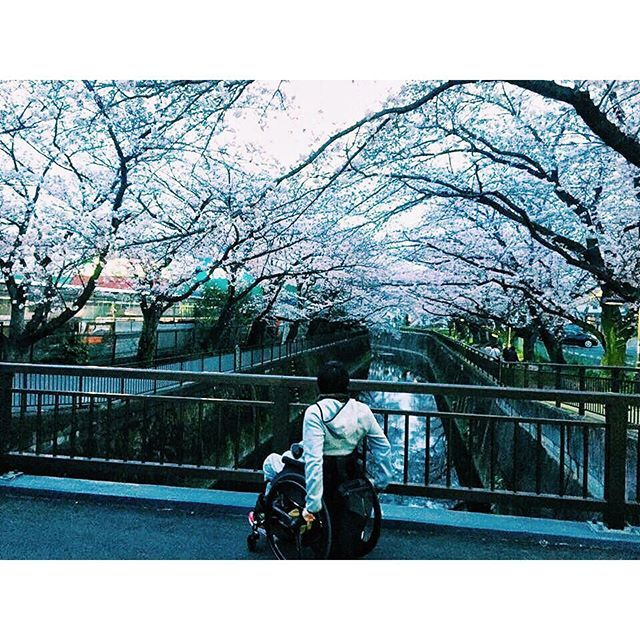 【kid0528】さんのInstagramをピンしています。 《It's been 1 and half year since accident happened. So many things has been changed, but I really appreciate that I can be looking forward to seeing cherry blossom next year with my husband. 事故で夫が歩けなくなってから1年半。去年の今頃はまだ旦那は入院していて、私は転職したばかりの会社で冬の商戦期の企画に奮闘しながらも家から1時間半の神奈川の旦那の病院に通ったなぁ。 ⁂ 思えば人生本当に色々ある。たった1つのことで、良くも悪くもこんなにも見る世界が変わることを実感する。 ⁂…