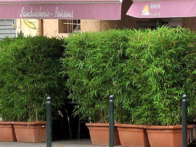 bambus als sichtschutz f r die gastronomie kaufen bambus. Black Bedroom Furniture Sets. Home Design Ideas