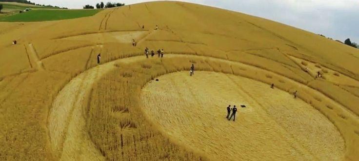 Crop Circle at Cavallo Grigio, Robella, Asti. Italy. Reported 30th June 2013
