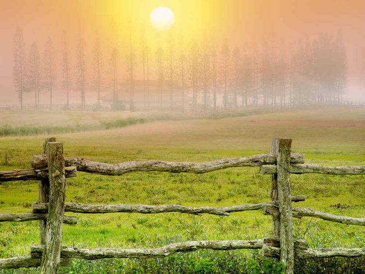 Fence Pasture and Cook Pines in Fog with Barn Stables at Koele Lanai Hawaii by Dennis Frates http://ift.tt/1XtAi5k #standard #tropical #photographers #dennisfrates #tropical #warm #fog #hawaii #fence #horses #pasture #foggy #touristdestination #lanai #barn #stablesatkoele #cookislandpine #cookpine #horse #norfolkislandpine #splitrailfence #like4like #picoftheday #photooftheday #canvasprints #rolledcanvas #gallerywrapped #prints #follow #like4follow