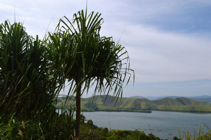Pohon Tikar. Danau Sentani. Papua