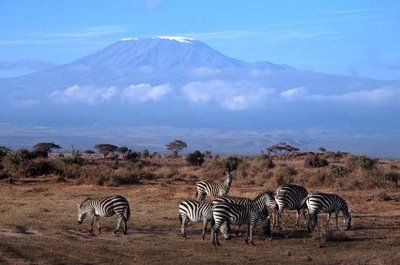 Experience a safari vacation in Kenya, the place where safari travel originated. The Kenya safari includes  Big 5 game viewing, incredible natural beauty and cultural encounters, often combining Kenya's top attractions in Tanzania and the tropical beaches of the Kenyan coast.
