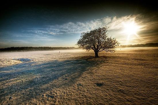 Beautiful Snowflake In The Sunlight: The Curragh Beautiful Sunrise.. In County Kildare