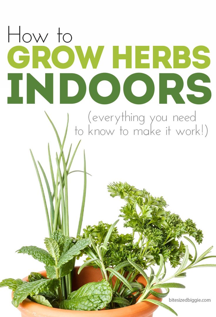 25 best ideas about growing herbs indoors on pinterest for Good plants to have indoors