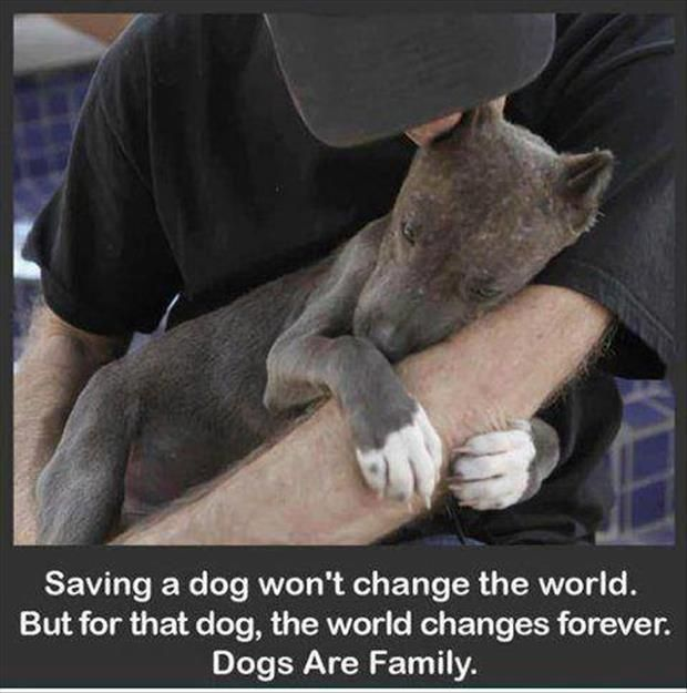 faith in humanity restored adopt a dog