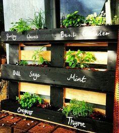 Transformer la palette dans un jardin d'herbes aromatiques                                                                                                                                                                                 Plus