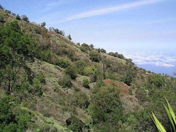 vegetation on the slope of the volcano Fogo, Cape Verde