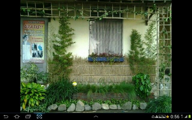 My tiny garden under my late young sister's window. She's gone to soon, too young too die..... :-)