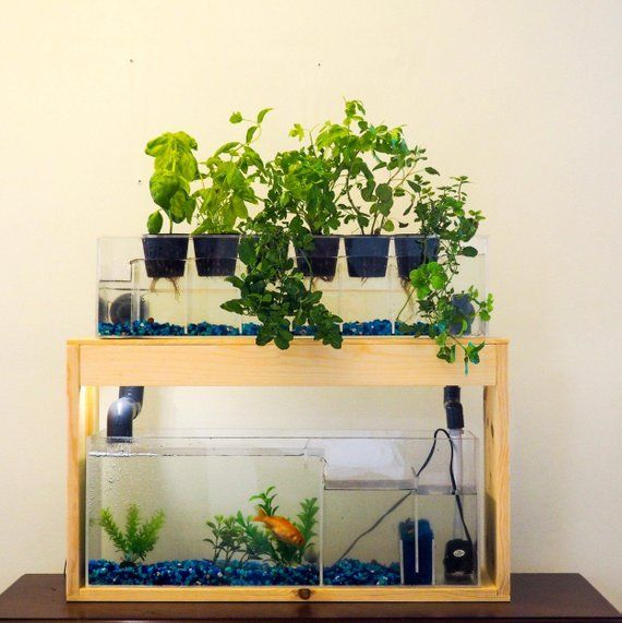 Home Aquaponic System With Plant Bed And Aquarium