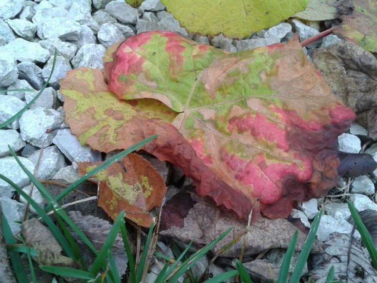 skarb jesieni