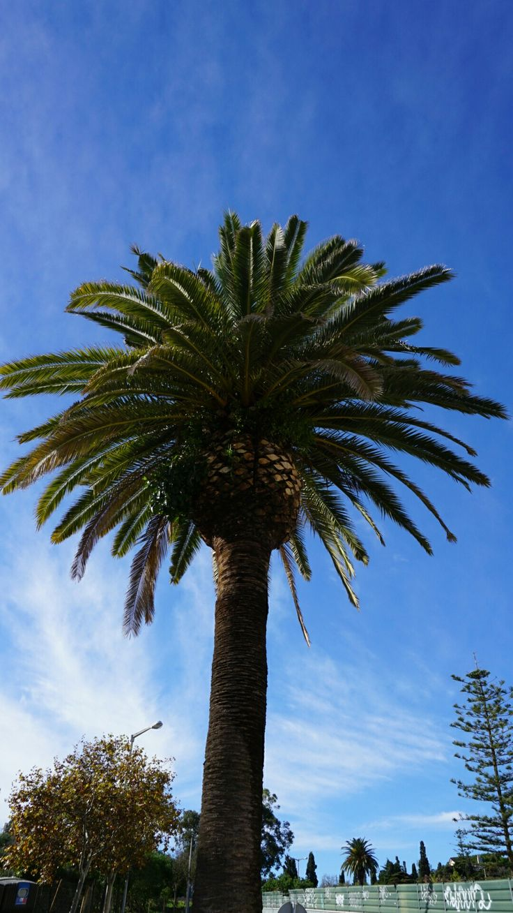 Lovely palm 🌴😋😍👏
