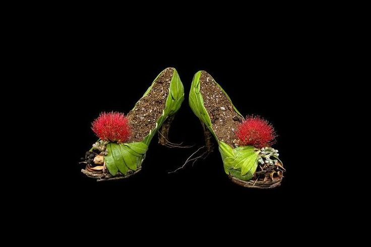 Pohutukawa dress shoes. Medium: C type photography (limited edition of 5)  500 x 720mm (framed). 2013