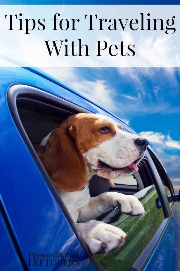 Tips for Traveling with Pets including how to easily travel with pets, staying in pet-friendly hotels and taking your dog on vacation.
