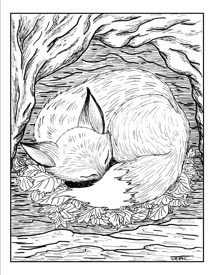 Free Adult Coloring Pages Fox Sleep Printable Pictures