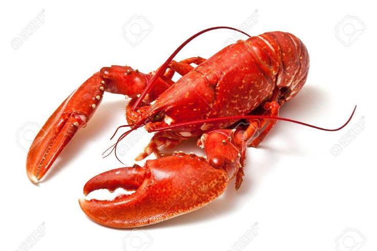 Lobster Claw Images, Stock Pictures, Royalty Free Lobster Claw ...