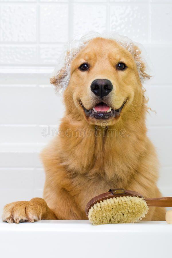 Dog Bath A Happy Dog Taking A Bath Sponsored Bath Dog Happy Bath Dog Ad Dog Bath Dogs Happy Dogs