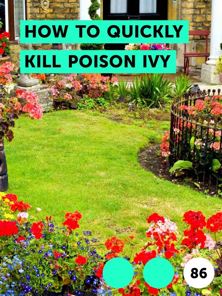 How To Quickly Kill Poison Ivy East Facing Garden Plants