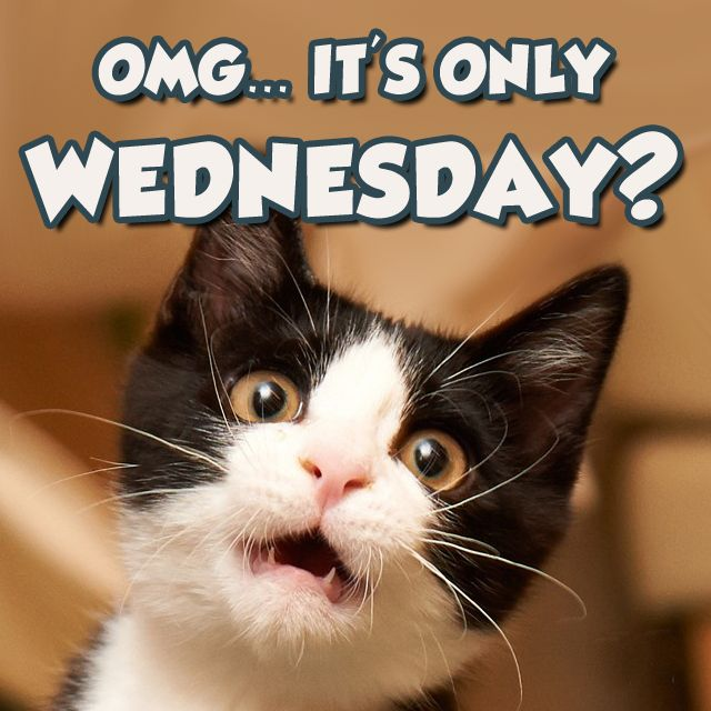 Happy Wednesday Cats | www.pixshark.com - Images Galleries ...