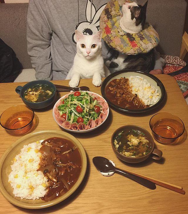 ハヤシさん 頂き物のハムやったら、贅沢に使うw すまんお父はん!『うどんがイイ。』言うてたんに…。しかもなんでか?また洗い物しといてくれた…。来週くらいに、うどん作るわ。 #八おこめ #ねこ部 #cat #ねこ #八おこめ食べ物 #ハヤシライス